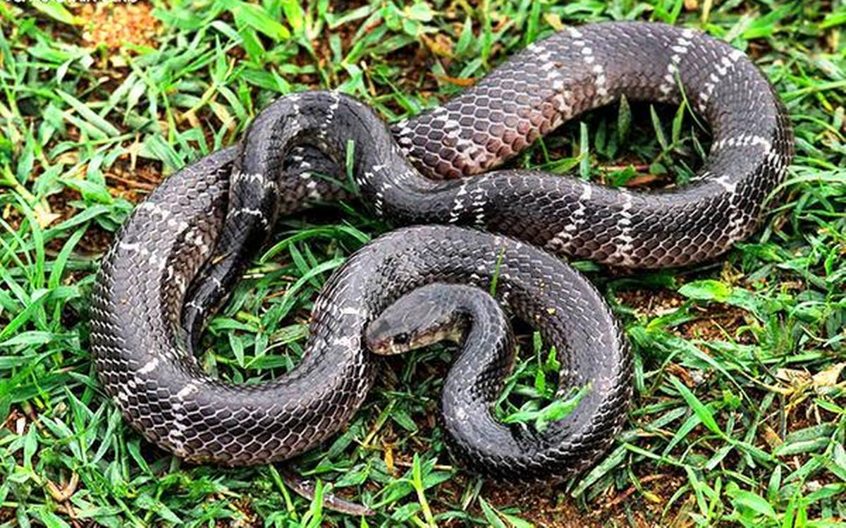 snakes-4f28c349