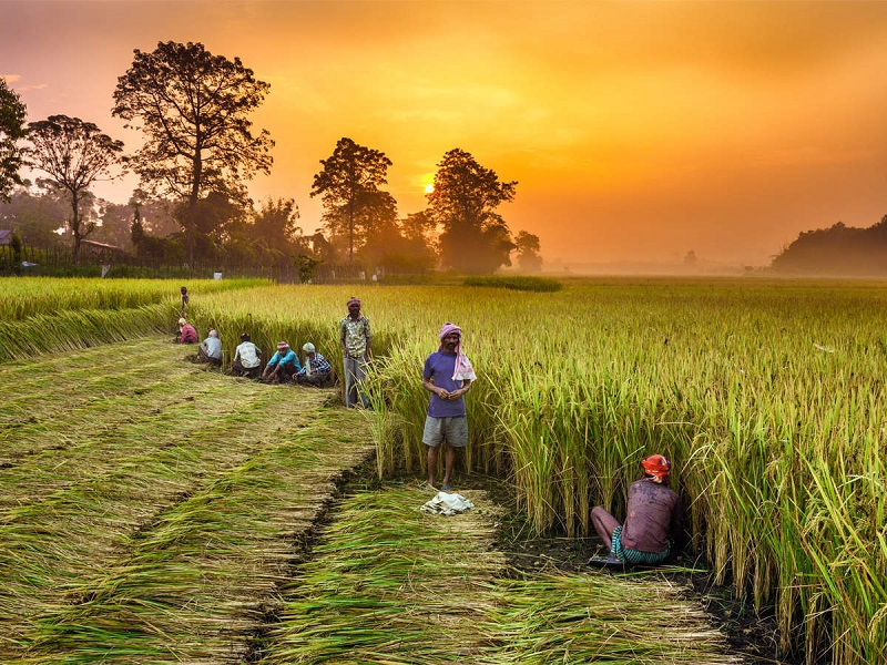 India Agriculture Market-1d6ff7a2